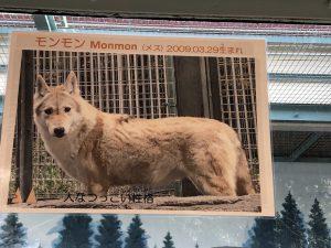 天王寺動物園オオカミ