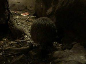 天王寺動物園キウイ