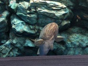 マリンワールド海の中道 魚