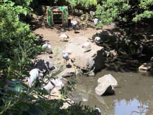 伊豆シャボテン公園鳥1
