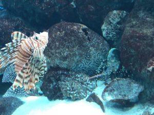 かごしま水族館 カサゴとエビ