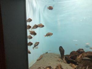 かごしま水族館 展示