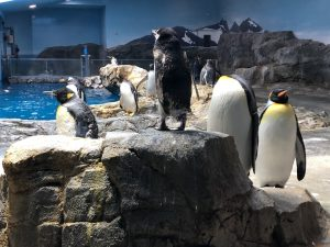 長崎ペンギン水族館 ペンギン